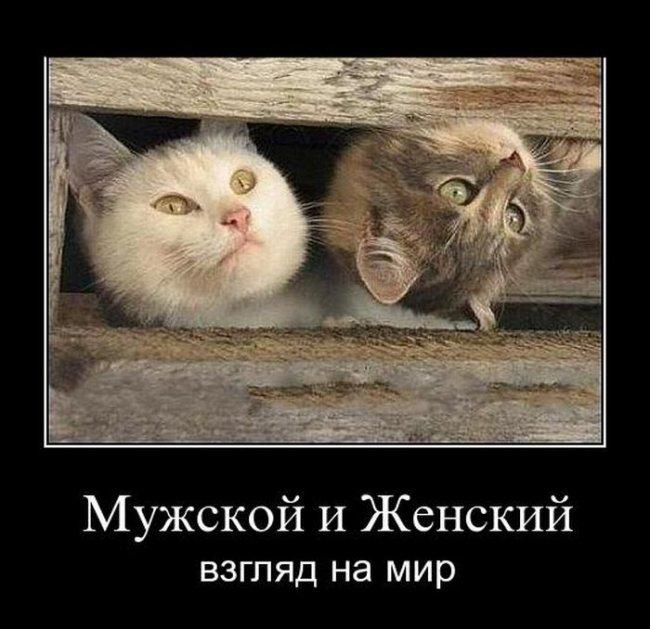http://minimozg.ru/uploads/posts/2011-10/thumbs/1318518794_1318483761_demotivatory_14.jpg
